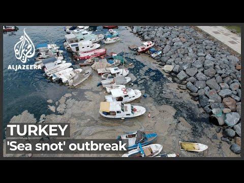 Turkey's 'Sea snot': Dense algae choking wildlife