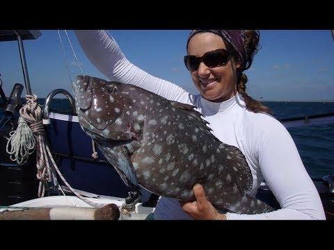 Bay of Sharks - Free Range Sailing Ep 2