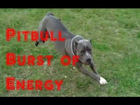 Pitbull Burst Of Energy