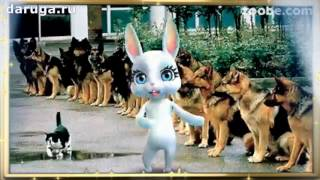 Прикольные поздравления с Днем Кинолога красивые короткие видео пожелания кинологу