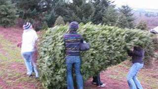 Hauling our Humungous Christmas Tree