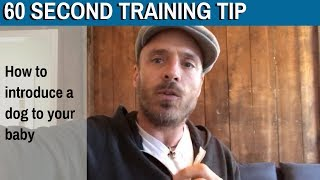 60 Second Training Tip: How to introduce a dog to your baby?