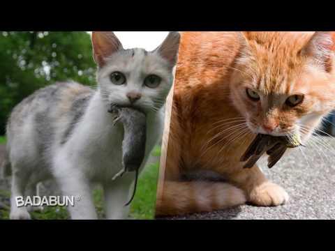 La razón porque los gatos traen animales muertos a casa