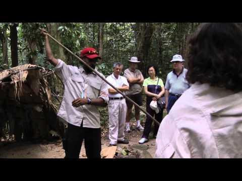 Daintree Rainforest, Cairns