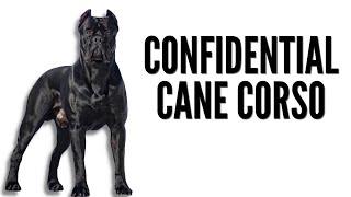 THE CONFIDENTIAL CANE CORSO