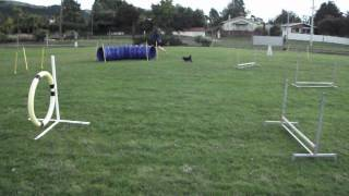 Learning Dog Agility
