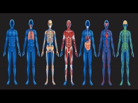 شاهد بالفيديو..20 حقيقة مدهشة عن جسم الإنسان