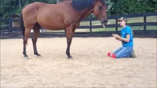 Smart Horse - 3 Cup Shuffle
