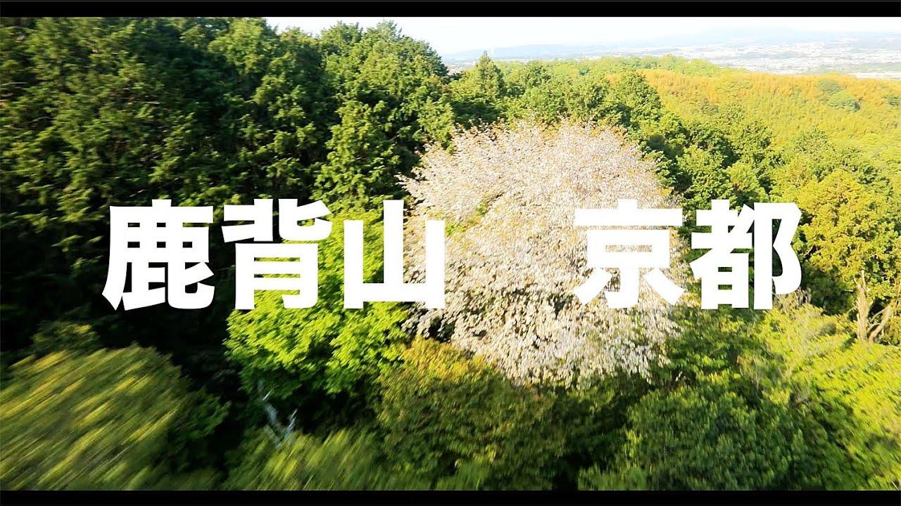 【空の旅#82】「撮れたて!春は山桜!」空撮・多胡光純 鹿背山_Kyoto aerial