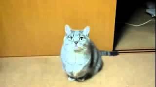 Прикольные кошки Вот что творят голодные котята Забавно смотреть!! 024