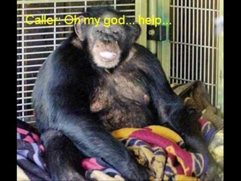 Image result for travis the chimp you tube