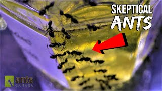 skeptical-ants-doubting-the-rumors-hilarious-ant-story