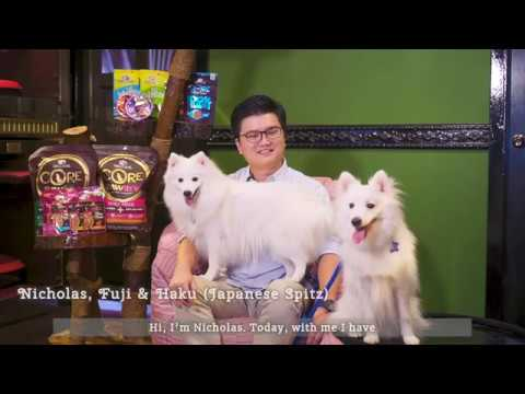 Wellness Top 10 Breeds: Japanese Spitz