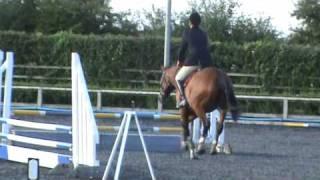 "JC Equestrian Verdie Boy H, Class One 2'3"" at Port Royal 5/08/09"