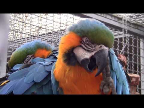 Papageien / Parrots im Grugapark, Essen - Februar 2014