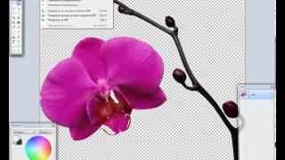 Урок для начинающих Работа в графическом редакторе Paint.net