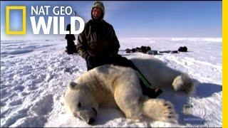 When Polar Bears Attack! | Explorer