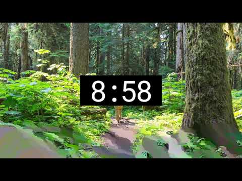 Relaxing Forest Nature Sounds