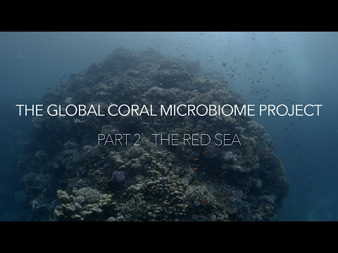 The Global Coral Microbiome Project, Part 2 - Saudi Arabia