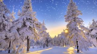 DasDeer - Winter