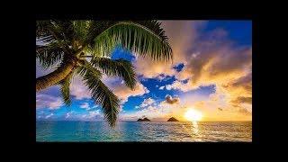 Happy UKULELE Music 10 Hours - Summer Ukulele Instrumental Background Cheerful, Joyful and Upbeat