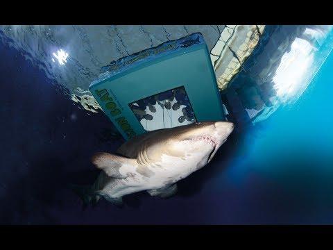 Shark Vision Boat, Palma Aquarium Majorca (Mallorca)