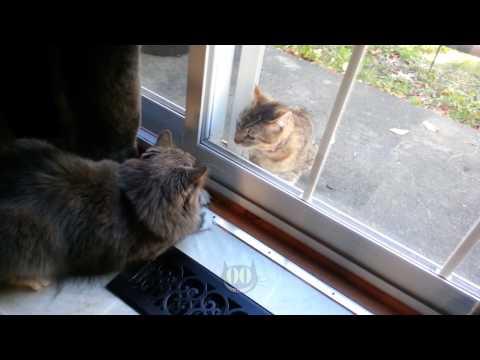 Cats fighting through door