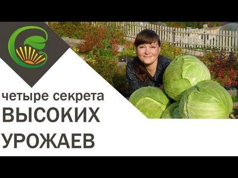 Простых четыре шага к высоким урожаям