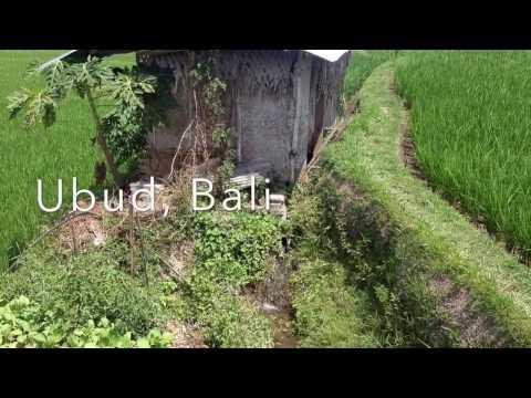Rice Fields, Organic Farm - Ubud, Bali, Indonesia