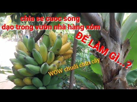 chia sẻ cuộc sống dạo vườn rau nhà hàng xóm để làm gì...?@CHIA SE CUOC SONG
