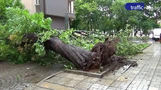 Бурята в Пловдив изтръгна от корен огромно дърво!