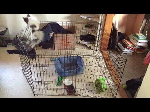 Super Smart Pomeranian Escapes Pen