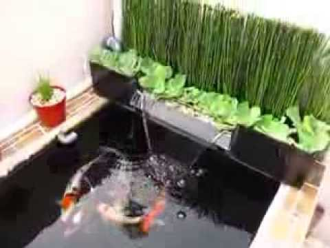 Mini Koi Pond On Rooftop 1 Youtube