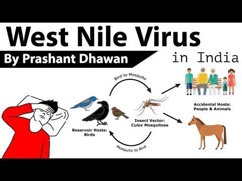 West Nile Virus in India केरल में सात साल के एक लड़के को वेस्ट नील वायरस का संक्रमण