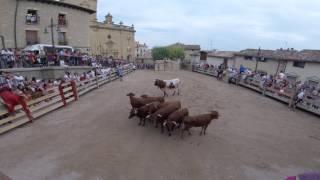 Fiestas de Mendigorría 2016