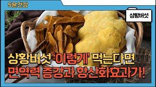 상황버섯의 놀라운 효능과 주의점 (고르는법, 손질법, …