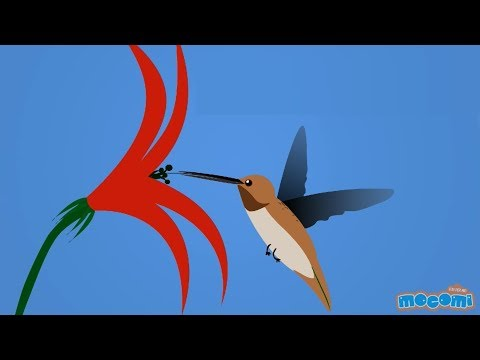 Hummingbirds - Fun Facts Series EP24 | Mocomi Kids