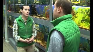 видео аквариумные рыбки