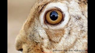 عبيد العوني في محمية مهند العمر للطيور النادرة الجزء الثاني wildlife desert