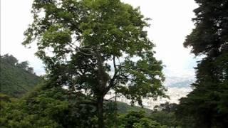 Galipan & Los Venados: Meshika in Venezuela