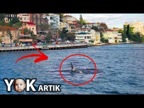 İstanbul'da Korkutan Görüntü! Boğaz'da Köpekbalığı!