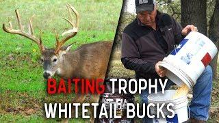 Hunting Whitetail Deer Tips using Powerful Bait!