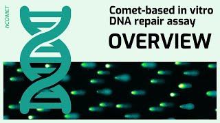 Overview // Comet-based in vitro DNA repair assay