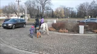 Pierwsze konie za Partynice