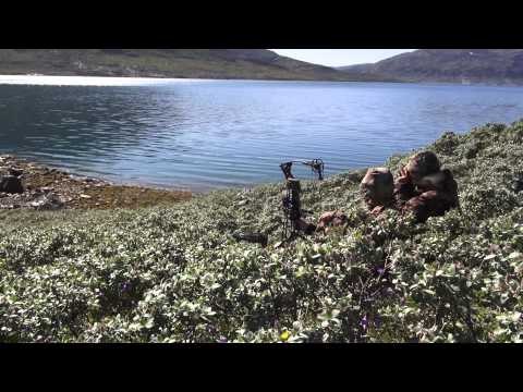 Bill Gunther kills a giant muskox in Greenland