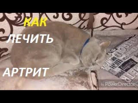 КАК ЛЕЧИТЬ АРТРИТ? ТАБЛЕТКА от АРТРИТА//Артрит у Кота //(Как Лечить Артрит?)Как Дать Коту Таблетку