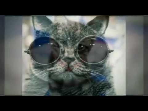 Крутые картинки котов-кошек