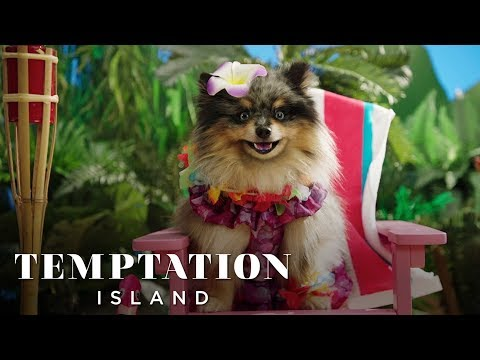 Check Out Temptation Island: Puppy Edition and Let Us Know if You Can Stand the Cuteness