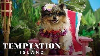 Temptation Island | Puppy Edition | on USA Network