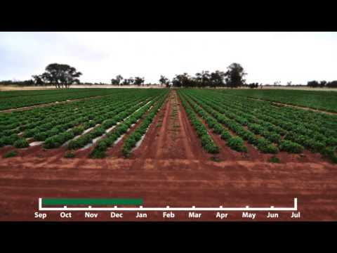 Time-Lapse of biodegradable plastic mulch film by Australian Bio-Plastics